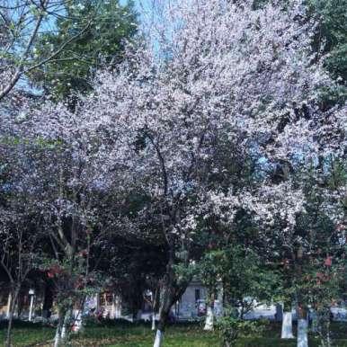 春的南川    花香柳阴